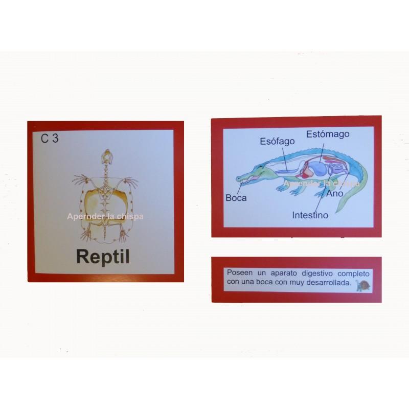 anatomia interna reptil zoología vertebrados
