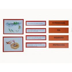 Comparativa anatomía interna de los vertebrados