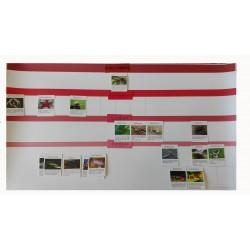 Cartelón Invertebrados mudo con tarjetas