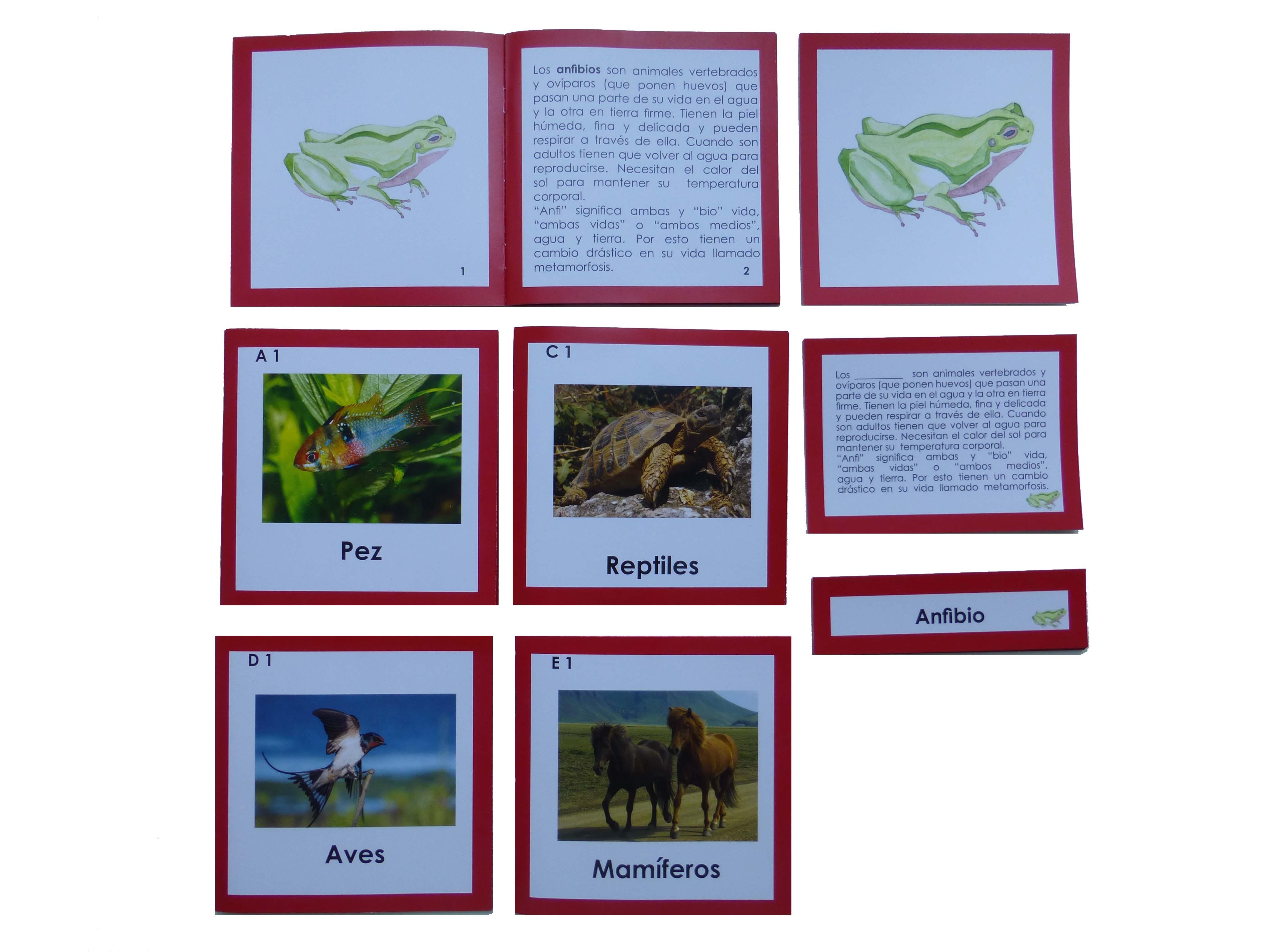 nomenclatura anatomía externa 5 vertebrados