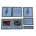 Nomenclatura botánica 3: RAÍZ