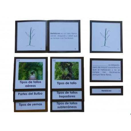 Nomenclatura botánica 4: TALLO