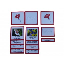 Nomenclatura botánica 5: FLOR