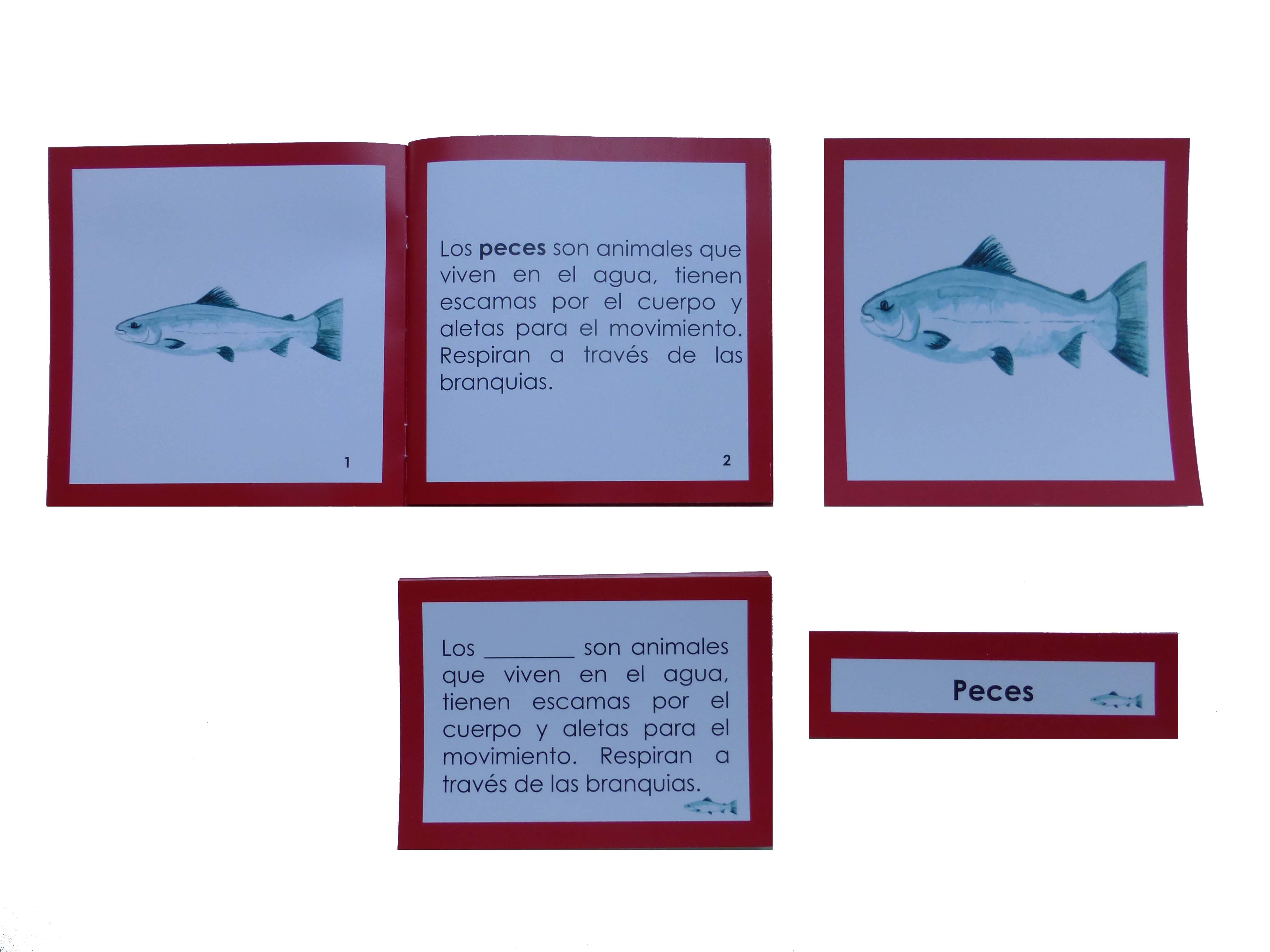 Nomenclatura anatomía externa pez - aprenderlachispa.tienda