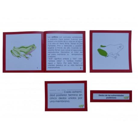 Nomenclatura con tarjetas de 3 partes plastificadas y librillo autocorrectivo de la anatomía externa del pez.