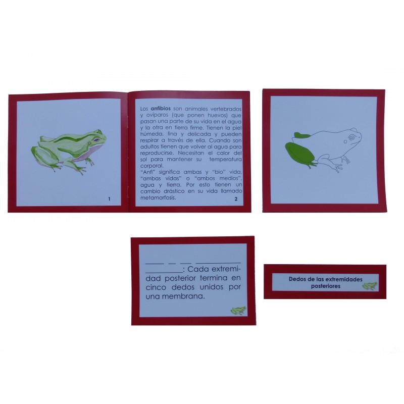 Nomenclatura con tarjetas de 3 partes plastificadas y librillo ...