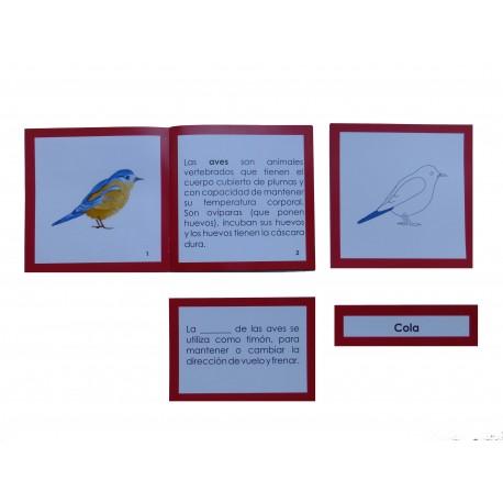 Nomenclatura anatomía externa ave