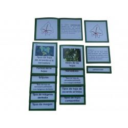 Nomenclaturas botánica 2: HOJA