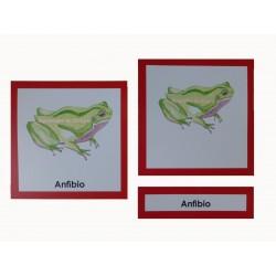 Anfibio 3 partes