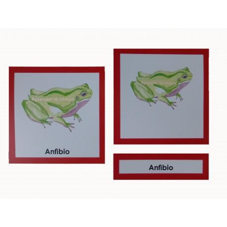Anfibio